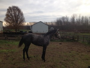 off track thoroughbred